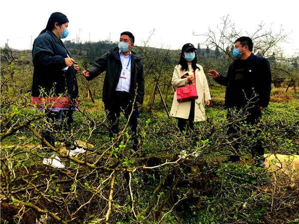 清镇市流长刺梨种植
